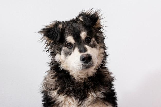 Cane sveglio dell'angolo alto su fondo bianco Foto Gratuite