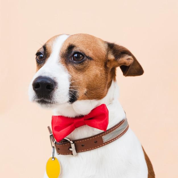 Cane sveglio di vista frontale con l'arco rosso Foto Gratuite