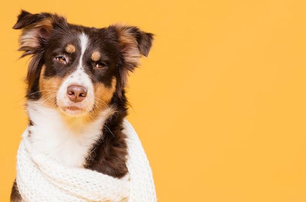 Cane sveglio di vista frontale con una sciarpa Foto Gratuite