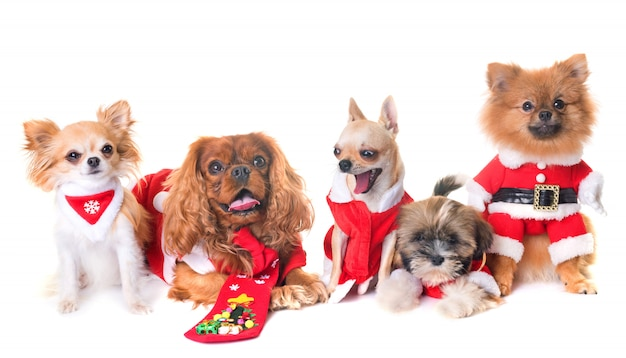 Cani e natale Foto Premium