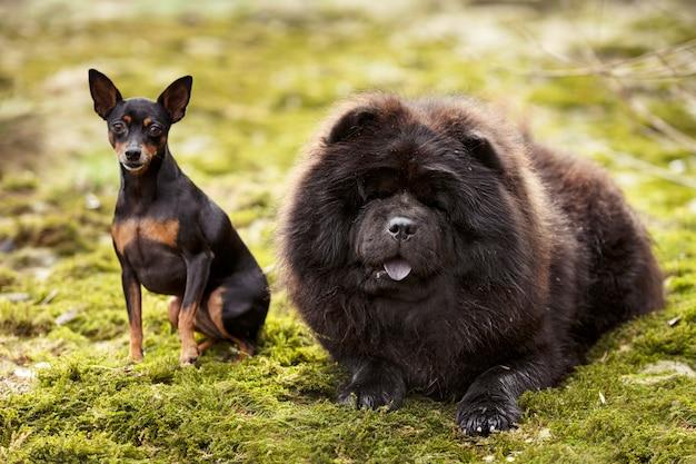 Cani in natura Foto Premium