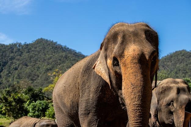 Capo della famiglia di elefanti di animali Foto Premium