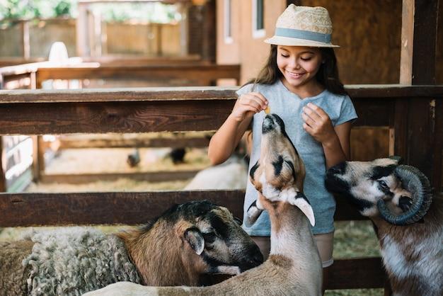 Cappello d'uso d'uso del cappello grazioso della ragazza alle pecore nell'azienda agricola Foto Gratuite
