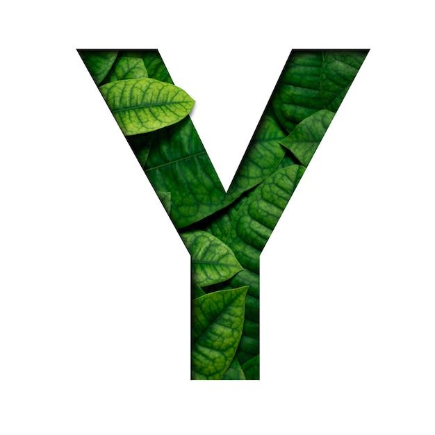 Carattere di foglie y fatto di foglie vere e vere con forma di carattere di carta preziosa tagliata. carattere di foglie. Foto Premium