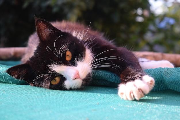 Carino gattino nero che dorme sulla strada Foto Premium