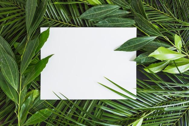 Carta bianca su sfondo di foglie verdi Foto Gratuite