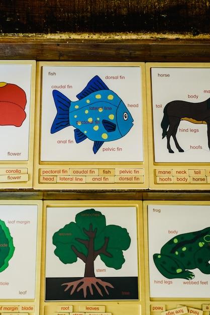 Carte con nomi di animali in una scuola montessori. Foto Premium
