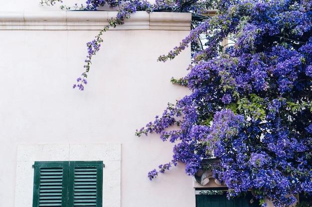 Casa con una pianta di fiori viola scaricare foto gratis for Pianta rampicante con fiori viola a grappolo