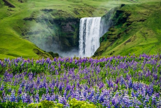Cascata di skogafoss in islanda in estate. Foto Premium