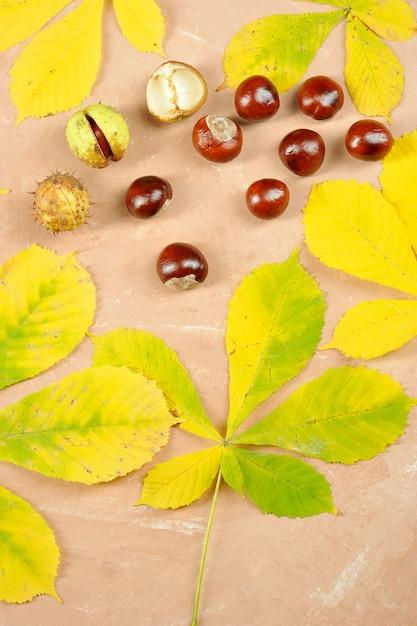 Castagne con foglie di acero in autunno - ippocastano Foto Premium