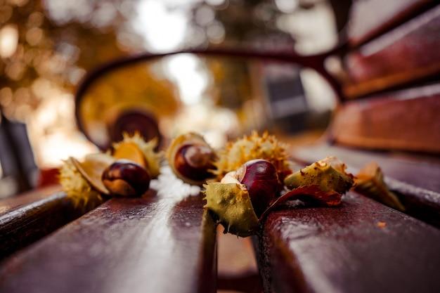 Castagne fresche si trovano su una panchina sullo sfondo di foglie d'autunno. paesaggio autunnale. Foto Premium