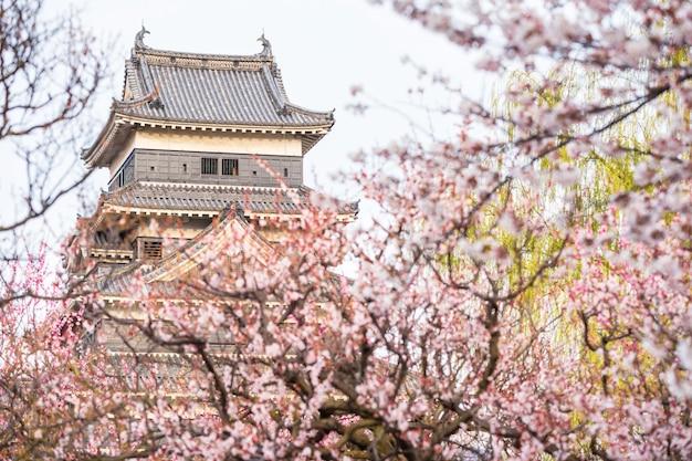 Castello di matsumoto con fiori di ciliegio Foto Premium