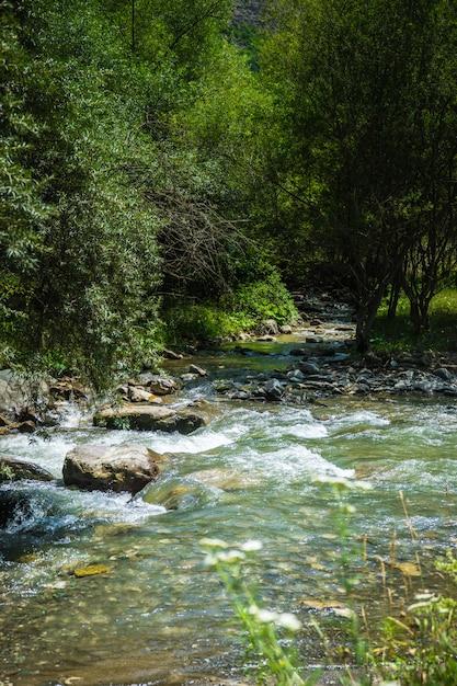 Catena montuosa di trialeti in georgia Foto Premium