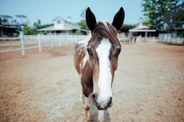 Cavallo al cavallo fattoria Foto Gratuite