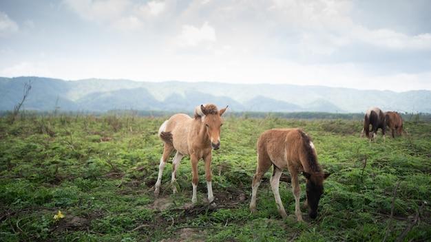 Cavallo che mangia sulla montagna del cielo blu del prato inglese Foto Premium