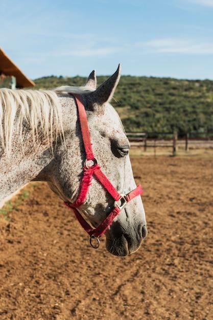 Cavallo grigio del primo piano con il freno rosso Foto Gratuite