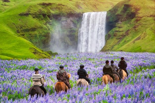 Cavallo turistico di giro alla cascata islanda di skogafoss. Foto Premium