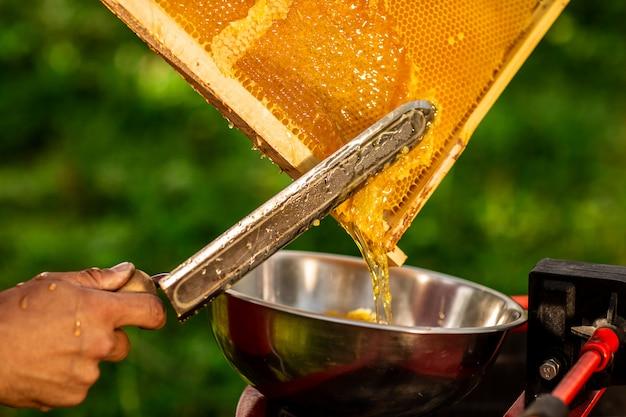 Cera da taglio per apicoltore dal telaio a nido d'ape con un coltello elettrico speciale Foto Premium