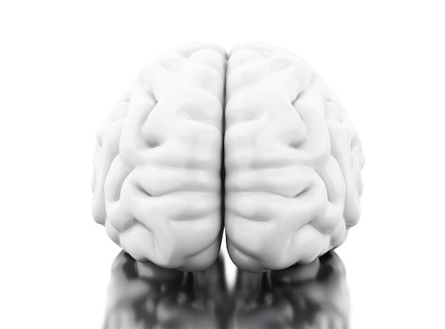 Cervello umano 3d. concetto di anatomia della scienza Foto Premium
