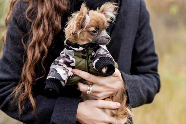 Chihuahua piccolo cane nelle mani della ragazza Foto Premium