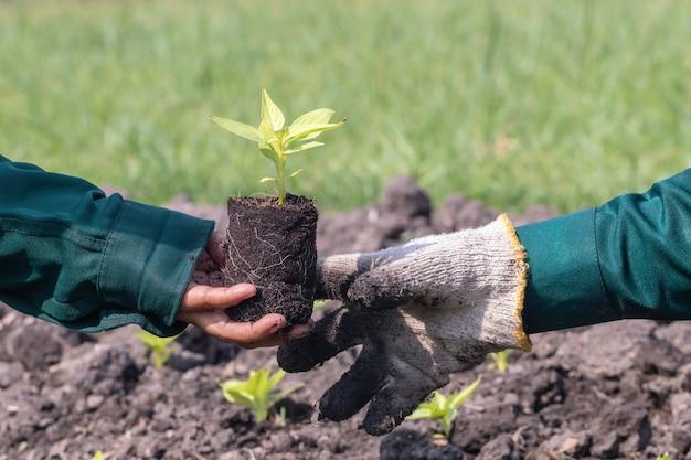 Chiuda in su con il fuoco selettivo su un semenzale della pianta Foto Premium
