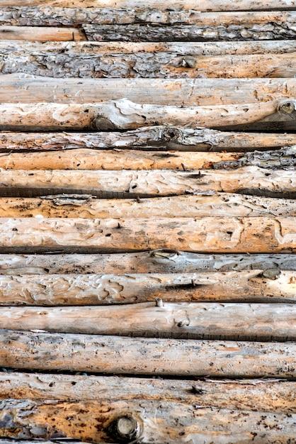 Chiuda in su dei tronchi di pino allineati Foto Premium