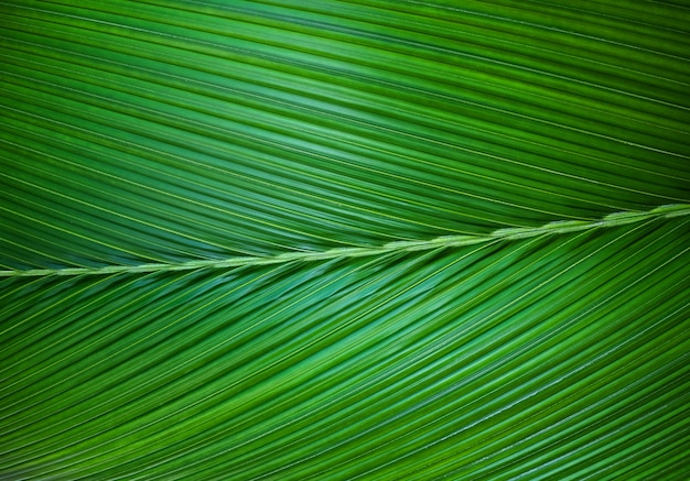 Chiuda in su della priorità bassa di foglia di palma verde. Foto Premium
