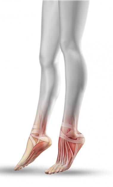 Chiuda in su delle gambe femminili con mappa muscolare parziale Foto Gratuite