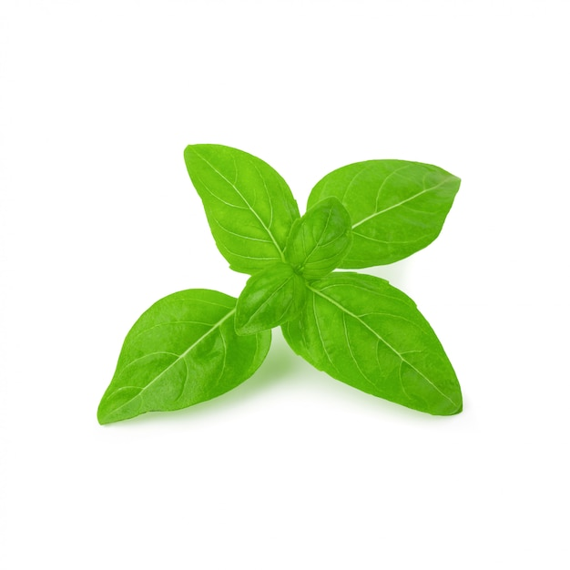 Chiuda su delle foglie verdi fresche dell'erba del basilico isolate su fondo bianco. dolce basilico genovese. Foto Premium