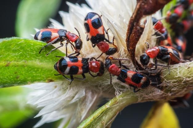 Chiuda sugli insetti sul fiore Foto Premium