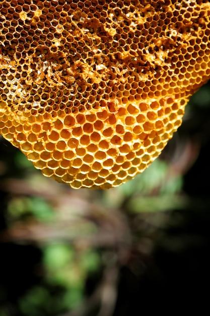 Chiuda sul bello favo giallo con miele Foto Premium