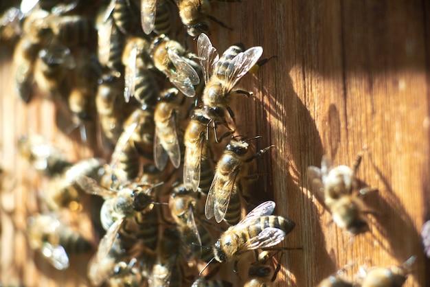 Chiuda sul colpo di lavoro delle api all'alveare dell'apiario. Foto Gratuite