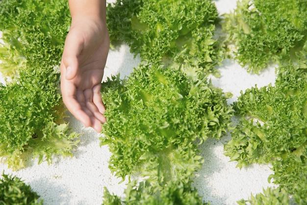 Chiuda sul coltivatore della mano in giardino idroponico durante il fondo dell'alimento di mattina Foto Gratuite