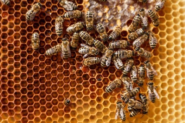 Chiuda sul favo nel telaio di legno con le api su. concetto di apicoltura Foto Premium