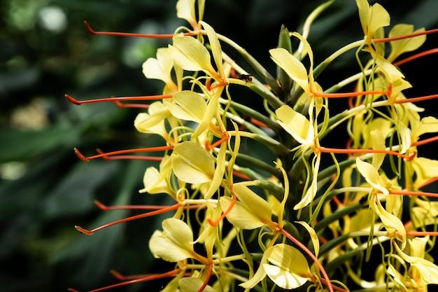 Chiuda sul fiore giallo esotico con fondo vago Foto Gratuite
