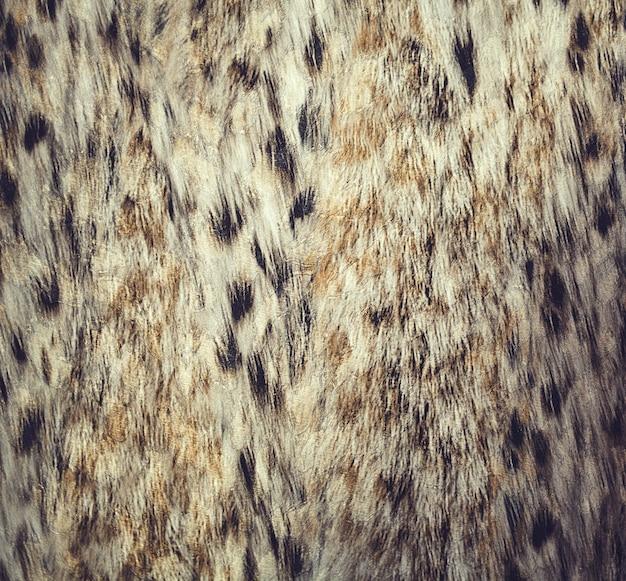 Chiuda sul modello del punto del leopardo Foto Premium