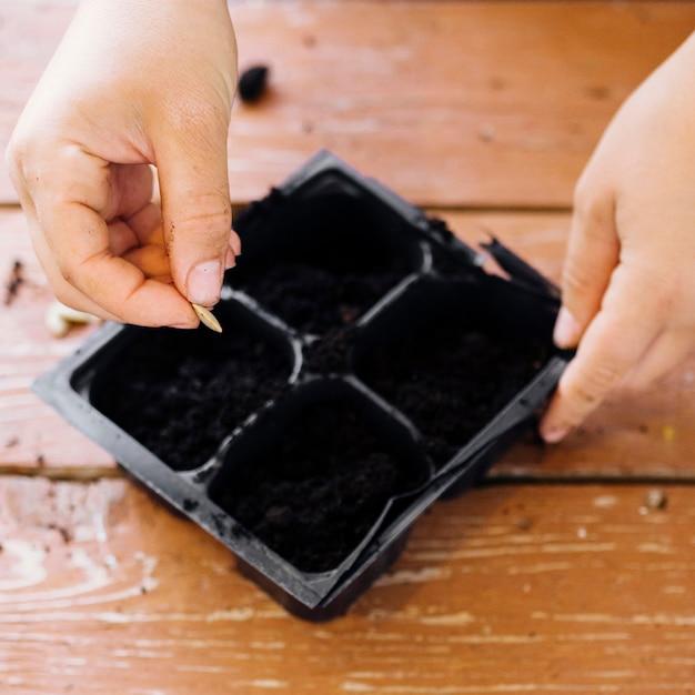 Chiuda sul vassoio di semina sulla tavola Foto Gratuite
