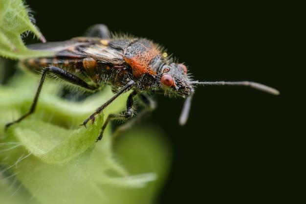 Chiuda sull'insetto sulle foglie del basilico Foto Premium