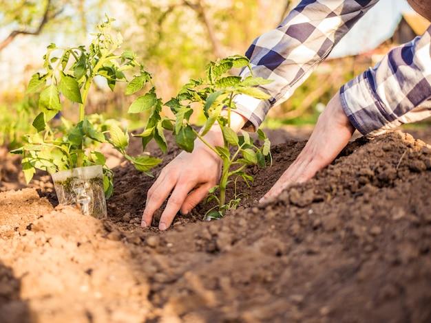 Chiuda sulla mano dell'uomo che pianta le piante nel giardino un giorno soleggiato Foto Premium