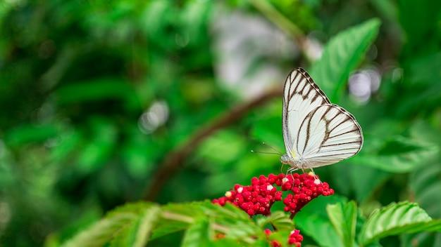 Chiuda sulla maschera dell'insetto della farfalla che si alimenta fiore in giardino Foto Premium