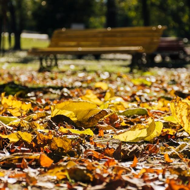 Chiuda sulle foglie di autunno con il fondo vago del parco Foto Gratuite