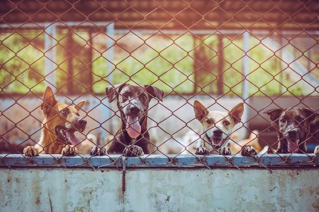 Chiudere i cani randagi. i cani randagi abbandonati senzatetto giacciono nelle fondamenta. Foto Premium