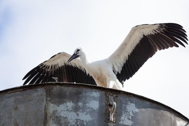 Cicogna nel nido Foto Premium