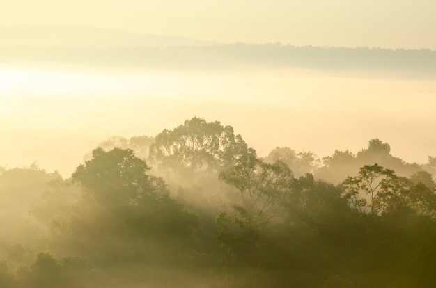 Cielo e montagne di mattina nella foresta del parco nazionale con il fondo vago del modello Foto Premium