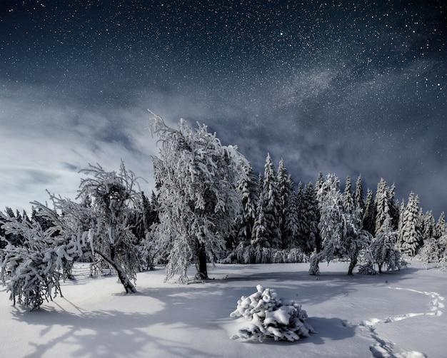 Cielo stellato nella notte nevosa di inverno. fantastica via lattea a capodanno. cielo stellato nevoso notte d'inverno. la via lattea è un fantastico capodanno Foto Gratuite