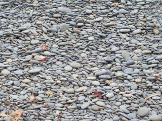 Ciottoli di granito - spiaggiati e ordinati Foto Gratuite