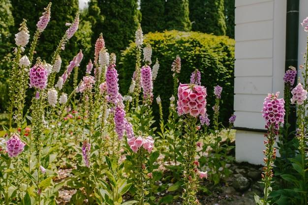 Close-up di campane rosa Foto Premium