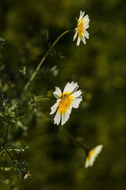 Close-up di fiori bianchi Foto Gratuite