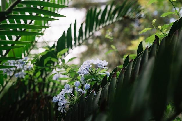 Close-up di fiori viola sull'albero Foto Gratuite