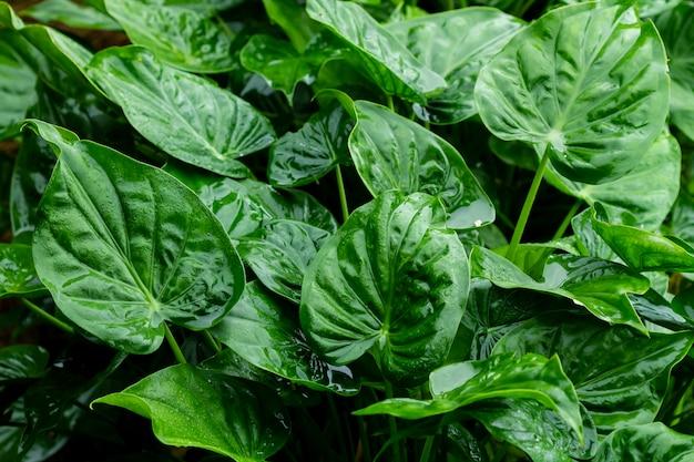 Close-up di foglie verdi Foto Premium